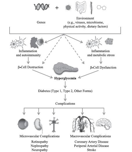 Beta Cell Centric Diabetes Medicine Personalized Medicine